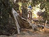 吳哥窟的樹:20.jpg