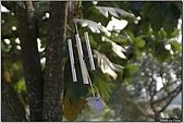開花的樹:樹上的風鈴
