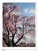 2009_04_15日本北陸行第一天:nEO_IMG_IMG_1145.jpg