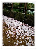 2009_04_15日本北陸行第一天:nEO_IMG_IMG_1138.jpg