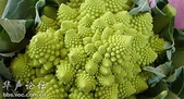 黃金比率:羅馬花椰菜...呈現幾何結構生長