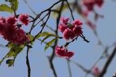 多元化-物篇:春.jpg