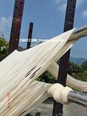 石碇傳統手工麵線相片集,讓您認識手工麵線,認識傳統手工:2010-4-2-曬手工麵線 (5).JPG