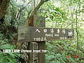 石碇傳統手工麵線相片集,讓您認識手工麵線,認識傳統手工:石碇皇帝殿-往東峰走了36分.JPG