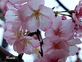 中正紀念堂:P3082397.jpg