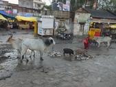 2015印度古文明之旅~動物篇:DSCF4695.JPG