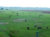2015印度古文明之旅~動物篇:DSCF4683.JPG