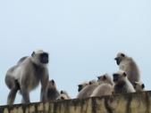 2015印度古文明之旅~動物篇:DSCF5759.JPG