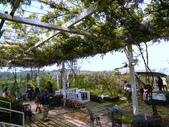 1020330紫藤咖啡園:1020330紫藤咖啡園05.JPG