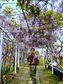 1020330紫藤咖啡園:1020330紫藤咖啡園10.JPG
