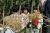 2011台南過新年:亞歷山大蝴蝶生態教育農場.JPG