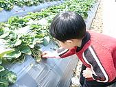 2Y9M的邦子:大湖採草莓 2008-2-28 下午 01-44-40.jpg