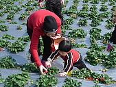 2Y9M的邦子:大湖採草莓 2008-2-28 下午 02-00-00.jpg