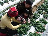 2Y9M的邦子:大湖採草莓 2008-2-28 下午 02-17-03.jpg