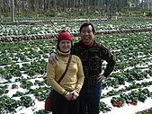 2Y9M的邦子:大湖採草莓 2008-2-28 下午 02-17-54.jpg