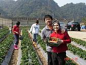 2Y9M的邦子:大湖採草莓 2008-2-28 下午 02-24-20.jpg