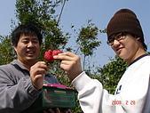 2Y9M的邦子:大湖採草莓 2008-2-28 下午 02-26-45.jpg
