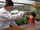 2Y9M的邦子:大湖採草莓 2008-2-28 下午 03-31-38.jpg