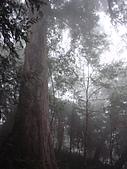 宜蘭棲蘭神木園 與 雅蘆民宿:棲蘭神木之旅-54.JPG
