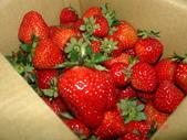 2Y9M的邦子:大湖採草莓 2008-2-28 下午 09-02-19.jpg