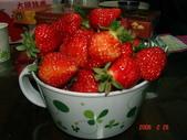 2Y9M的邦子:大湖採草莓 2008-2-28 下午 09-06-49.jpg