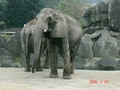 2Y9M的邦子:木柵動物園 2008-2-29 下午 04-17-34.jpg