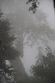 宜蘭棲蘭神木園 與 雅蘆民宿:棲蘭神木之旅-262.JPG