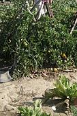 2011台南過新年:亞歷山大蝴蝶生態教育農場-18.JPG