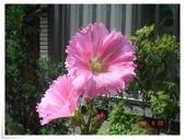 2015花圃菜園:DSC08848.JPG