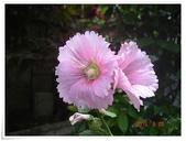 2015花圃菜園:DSC08853.JPG