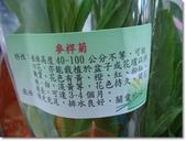 2014:2013.03.10-5 麥桿菊.JPG