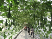 2021屏東熱帶農業博覽會之行:IMG_4528.JPG