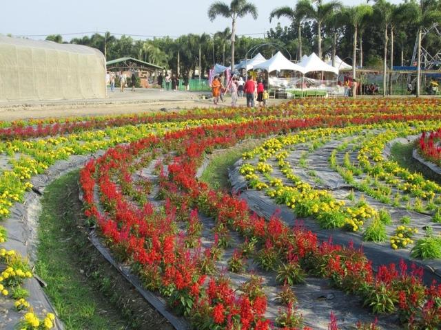 IMG_4582.JPG - 2021屏東熱帶農業博覽會之行