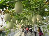 2021屏東熱帶農業博覽會之行:IMG_4531.JPG