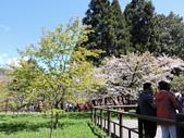 2018.03.28阿里山賞櫻:DSCN6402.JPG