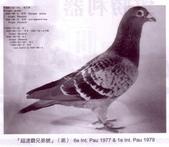 鵝:i03.jpg