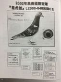 鵝:IMG_1883.JPG