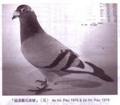 鵝:i02.jpg