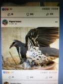 鵝:IMG_9904.JPG