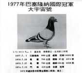 鵝:107-1.jpg