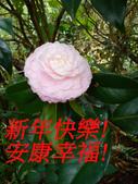 恭賀新年快樂! 祝福安康幸福! :happy-new-year-2013.jpg