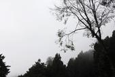 阿里山森林遊樂區:IMG_2356