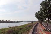 鄉村:溪畔行道樹-黃槿