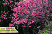 草山行館:IMG_3846