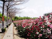 蜀葵花:DSC03272