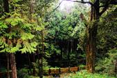 阿里山森林遊樂區:IMG_2343