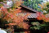 福壽山農場 - 2020:IMG_4780