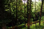 阿里山森林遊樂區:IMG_2342