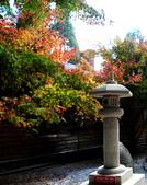 福壽山農場 - 2020:IMG_4796