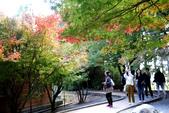 福壽山農場 - 2020:IMG_4803